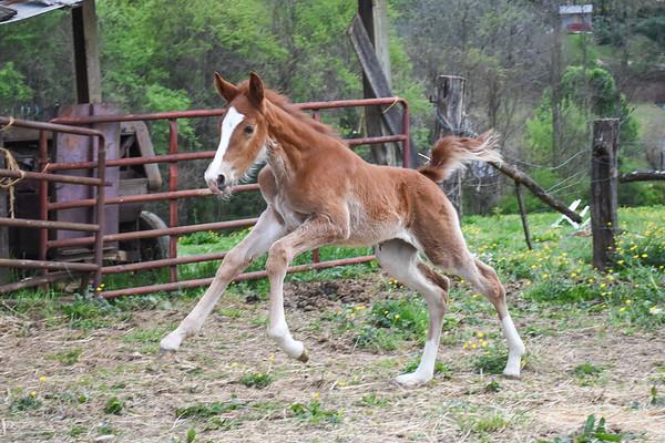 Horses-023