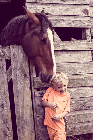 Horses-014