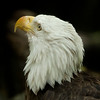 Eagle SS1748