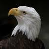 Eagle SS1760
