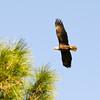 Bald Eagle Flight 58020