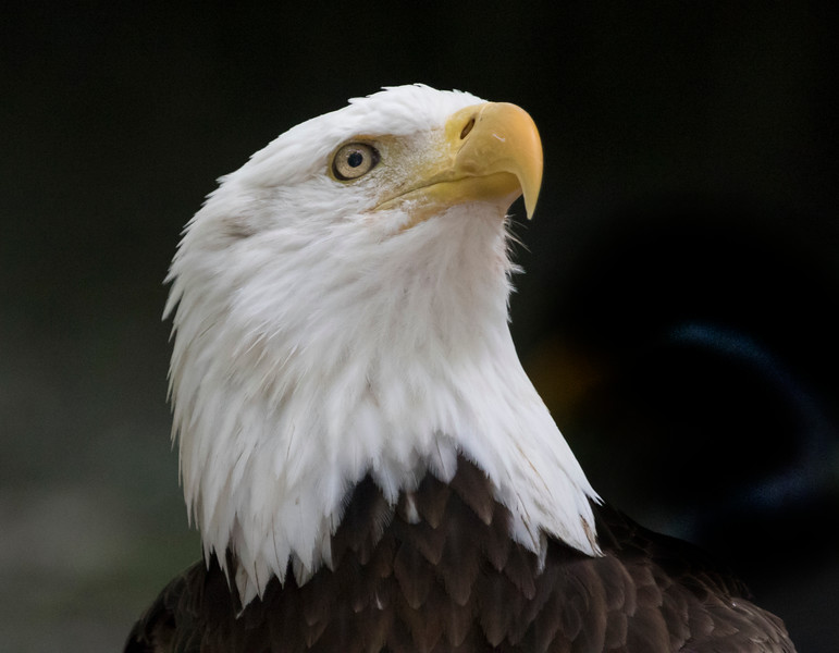 Eagle SS1765