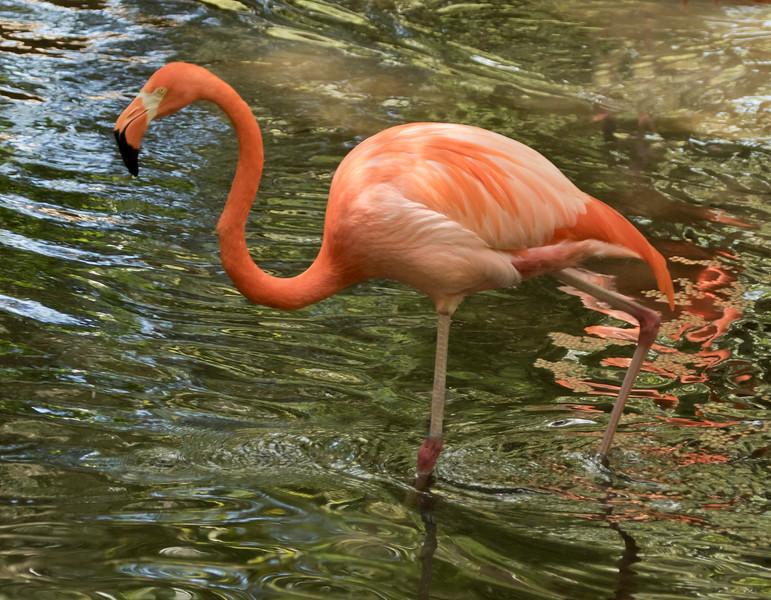 Flamingo SS1635