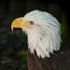 Eagle SS1992