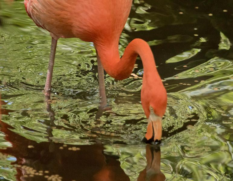 Flamingo SS1639