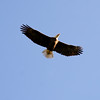 Bald Eagle Flight 58016