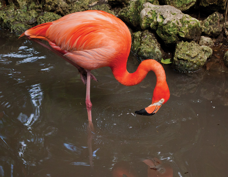 Flamingo_SS4507