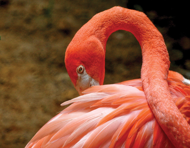 Flamingo_SS3671
