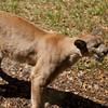 Panther SS0908