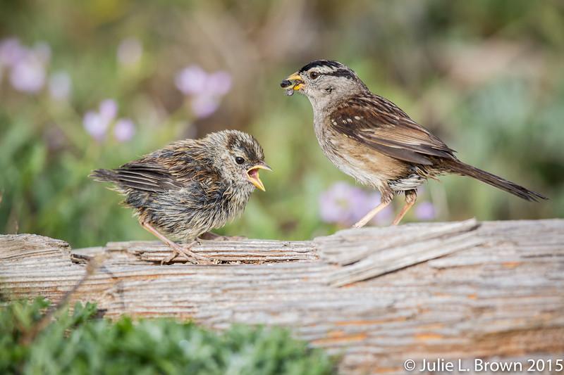 Photo Birding Adventures