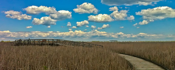 Marsh Boardwalk Point Pelee NP, 5/10/12