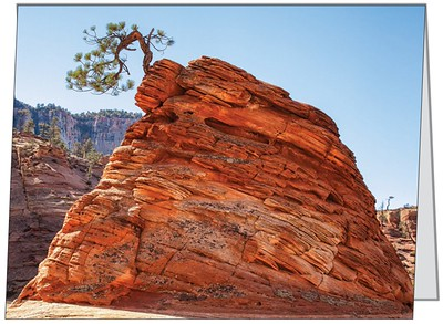 Bonsai Tree, Zion NP