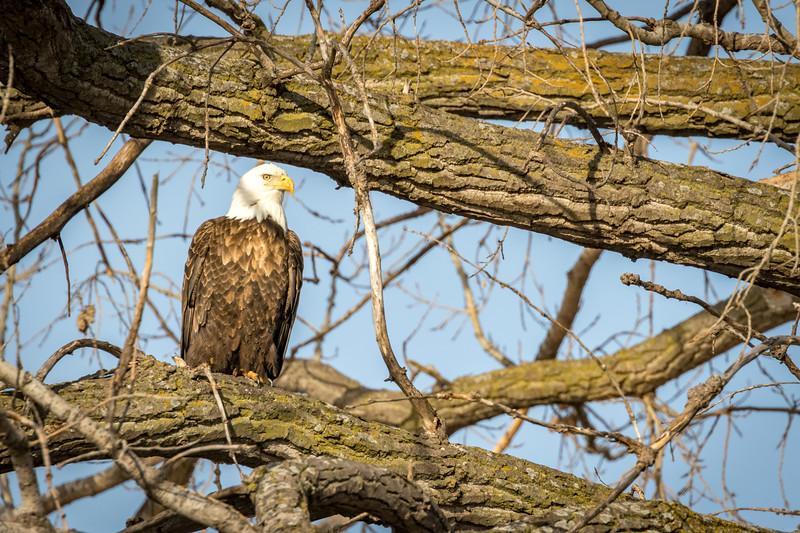 19feb17 eagle day-6