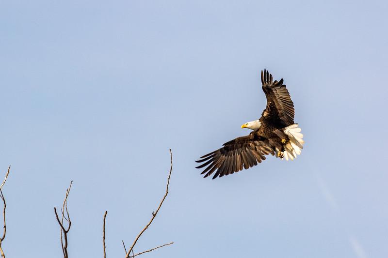 19feb17 eagle day-10