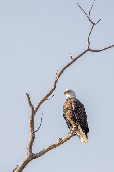 19feb17 eagle day-31