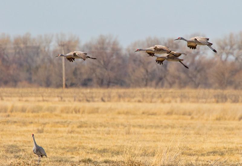 Cranes-67-Edit