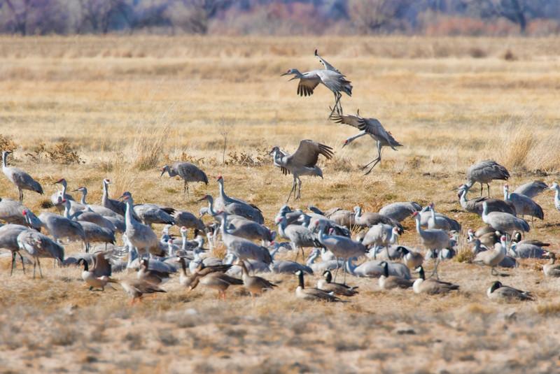 Cranes-74-Edit