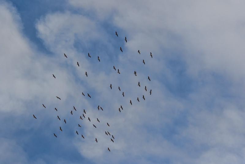 Cranes-17