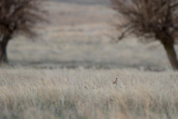 prairie chickes cranes zoo-263
