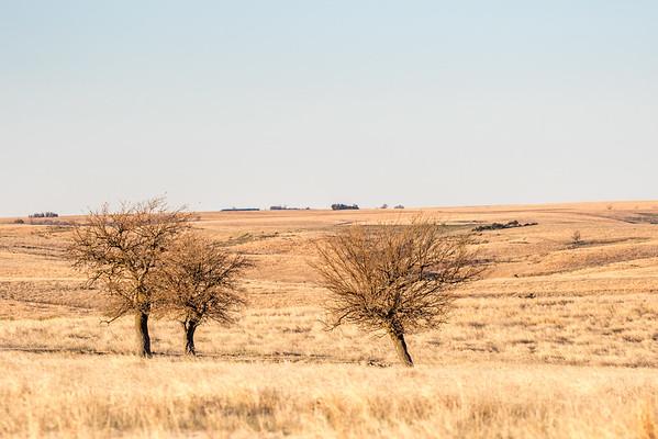 prairie chickes cranes zoo-396