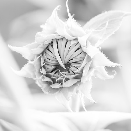 flowers-80-2