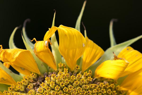 flowers-74