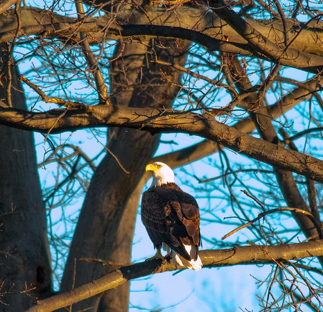 Eagles and other Wild Life