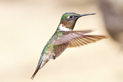 HUMMINGBIRD September 8, 2011