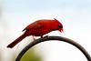 May 6, 2013<br /> Cardinal