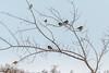 December 27, 2012 <br /> Birds