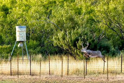 November 17, 2012  Rush Ranch Buck