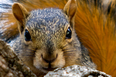 Baby Squirrel  June 11 2012