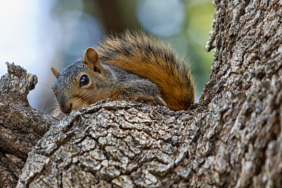 Baby Squirrel June 11 2012