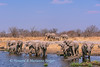 elephant (Loxodonta africana) herd drinks at Nuamses waterhole, Etosha National Park, Namibia.