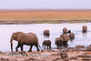Herd ofelephant (Loxodonta africana) cross the Chobe river at sunrise. Chobe National Park, Botswana,