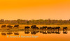 At sunset a large elephant (Loxodonta africana) herd,parade past Nyamandhlovu Platform, Hwange National Park, Zimbabwe
