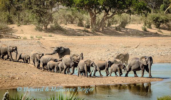 Elephants come to drink & bathe