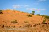 Wildebeest in the san dunes