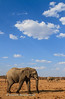 Elephant foreground