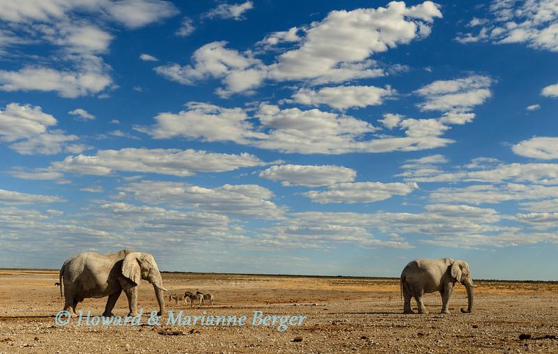 Elephant bulls at Newbrowni 2