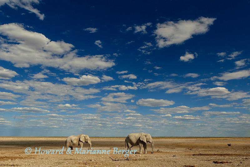 Elephant bulls at Newbrowni 1