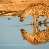 A hyena reflects on its day