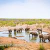 Elephant at Moringa