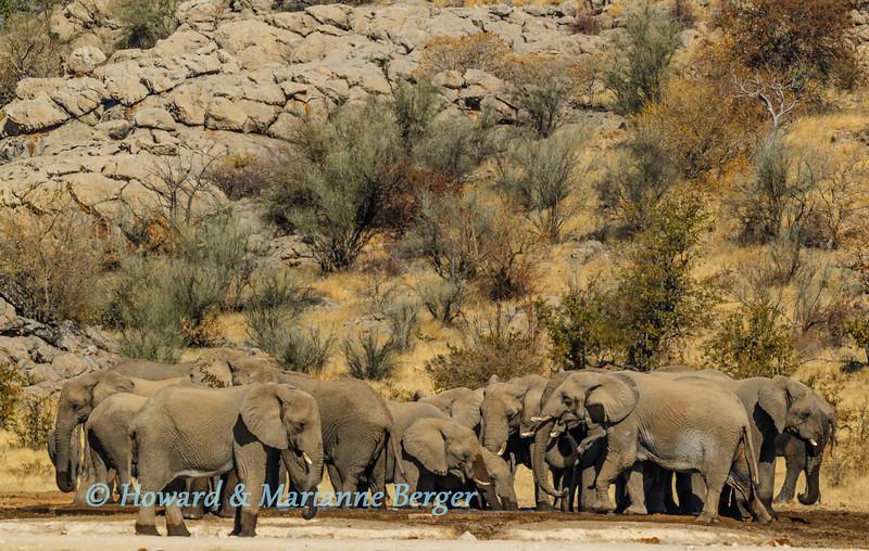 Elephants & boulders