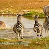 Zebra alarm 3