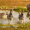 Zebra alarm 2