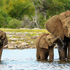 Elephants at Klein Namutoni 1