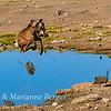 Kudu high jump 4