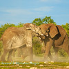 Elephants at Klein Namutoni 4