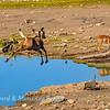 Kudu high jump 6